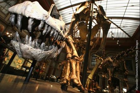 dinosaures,sauropodes,fossiles,pistes,jurassique