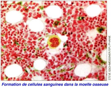 Cellules-souches-cardiaques-photo.jpg