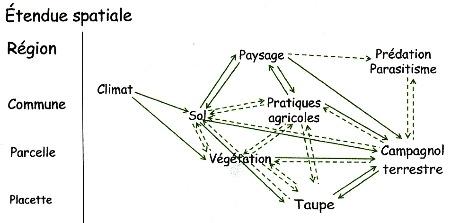 02campagnol-puzzle écologique104.jpg