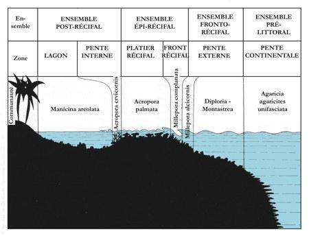récif barrière02-1.jpg