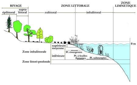 8.lacs_zonation_végétale24-1.jpg