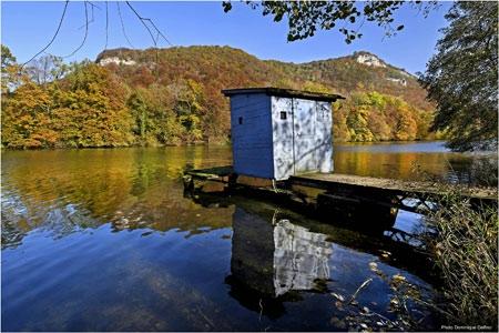 dominique delfino,photographe naturaliste et animalier,pays de montbéliard,paysage automnal