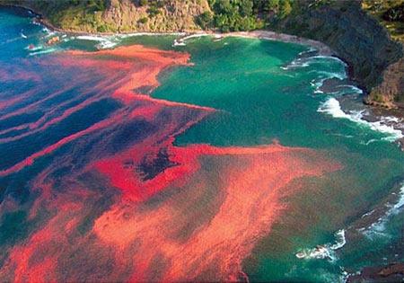 loue,poissons,pollution,cyanobactéries,algues bleues,bloom,efflorescence,oscillatoria