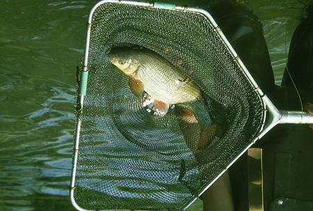 pêche-électrique_021-1.jpg