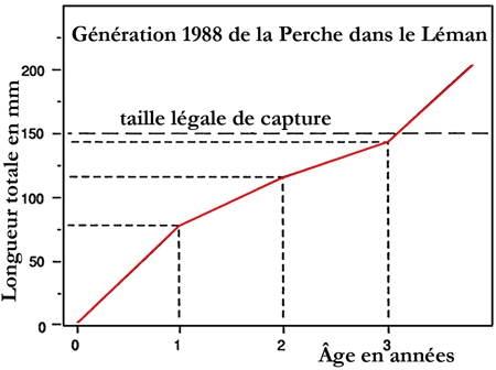 lacs_Léman_perche_17-1.jpg