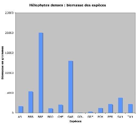 Hélophytes-poids_d+m1.jpg