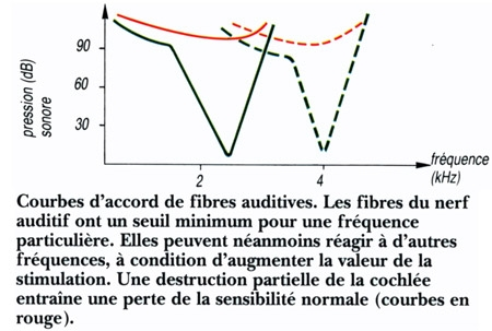 Figure08-Fibres-auditives-450.jpg