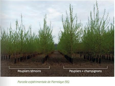 michel chalut,laboratoire chronoenvironnement,sols pollués,soins par les plantesnvirroenement