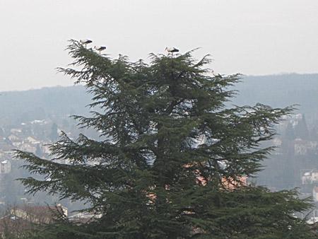Cigognes-Besançon_02-450.jpg