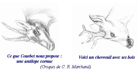 têtes-antilope-chevreuil-450.jpg