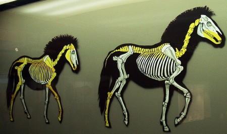 chevaux reconstitués1.jpg