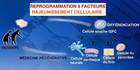 Montpellier - laboratoire INSERM -02_ Système de traitement