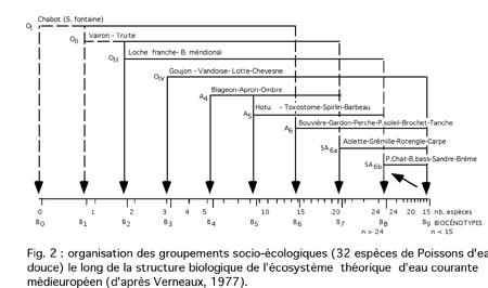 Poissons_groupements_socioecologiques-450.jpg