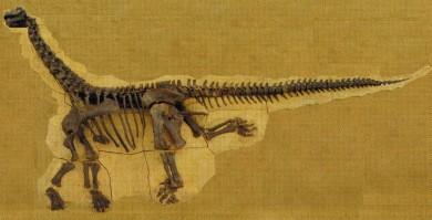 3Camasaurus-1.jpg