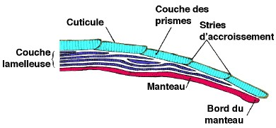 escargot—coquille_2-1.jpg