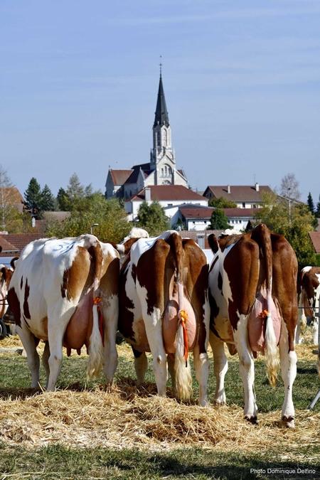Vaches-comice des Écorces_01-450.jpg