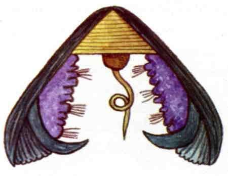 anodonta-glochidium-1.jpg