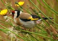 déclin de la biodiversité