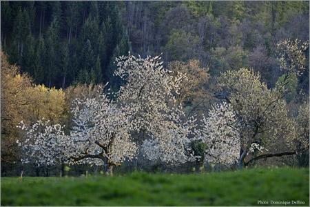 Tableau-de-printemps-Delfino-450.jpg