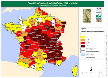 ambroisie,ambroisie en franche-comté