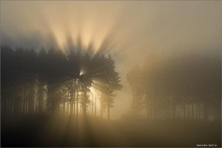 dominique delfino,photographe naturaliste et animalier,brouillard hivernal,plateau d'Écot,pays de montbéliard,
