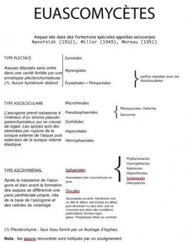 Euascomycetes.jpg