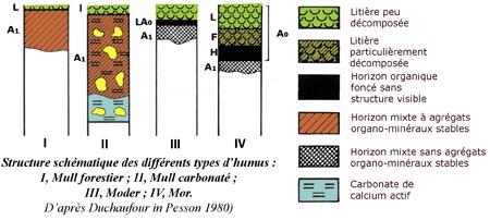 Schéma-des-différents-types-d'humus-450.jpg