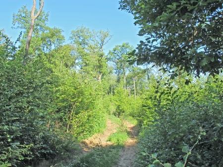Forêt de Thise_05-parcelle 18-groupe de régénération.JPG