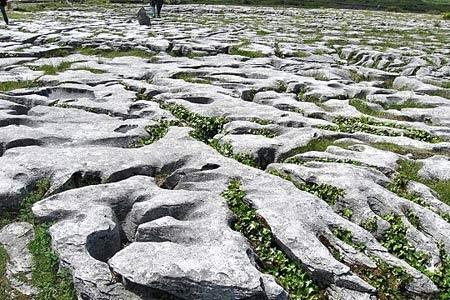 Lapiaz-de-Burren-(Irlande)-450.jpg