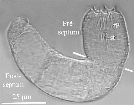 nematomorpha,gordiidae,parasites manipulateurs