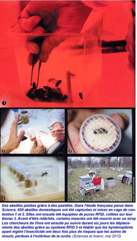 abeilles,cruiser osr,pesticides,mortalité des abeilles