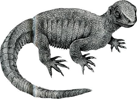 reptiles,chéloniens,tortues,phylogénie des tortues