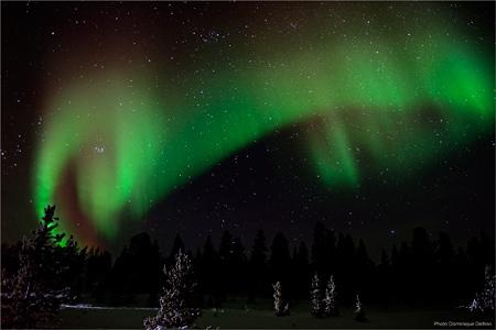 aurore boréale,nuit polaire,grand nord,dominique delfino,photographe naturaliste et animalier