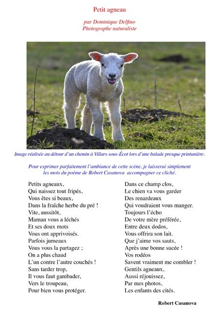 Petit-agneau1-450.jpg