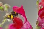 néonicotinoïdes,abeilles,bourdons,union européenne,pesticides,clothianidine,imidaclopride,thiaméthoxame