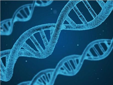 L'ADN-nucléaire-contient-l'intégralité-de-notre-code-génétique-450.jpg