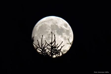 lune-perchée-sur-des-arbres-450.jpg