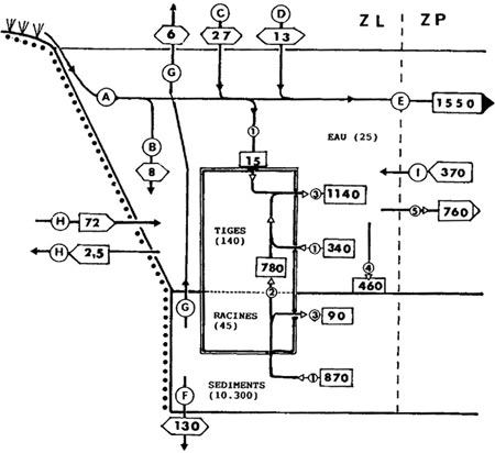 Figure-5-450.jpg