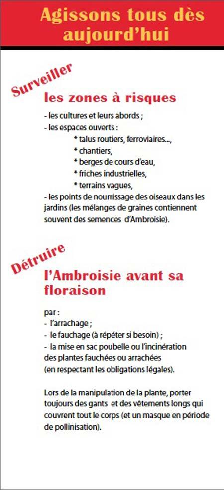 Ambroisie-4-450.jpg
