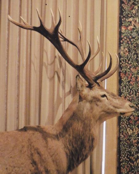gustave courbet,cerf,chevreuil,antilope,bois de cerf,bopis de chevreuil,corne d'antilope,artiste peintre