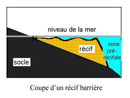 01-Récif barrière01-1.jpg