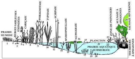 7.lacs_végétation-1.jpg