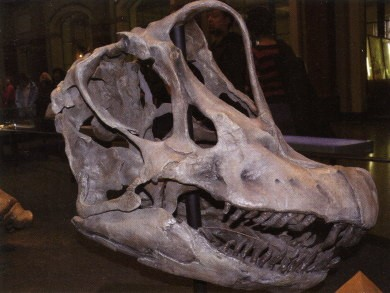 2Brachiosaurus-1.jpg