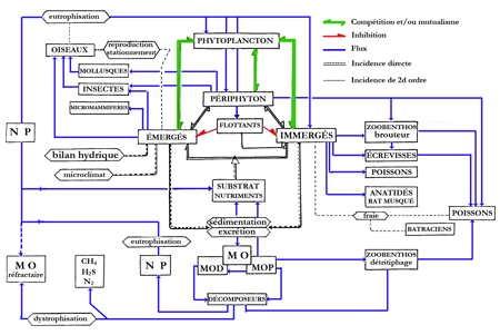 11.lacs_réseau trophique6-1.jpg