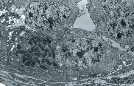 cellule-souche-divisionME81.jpg