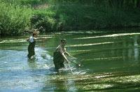 pêche-électrique_200.jpg