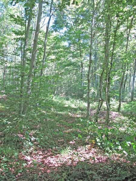 Forêt-de-Thise_12-ligne-parcelle-41-450.jpg
