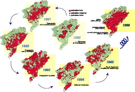 campagnol terrestre infestation Doubs1.jpg