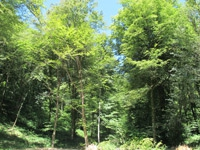 Forêt-de-Thise_17-parcelle-56-200-logo.jpg