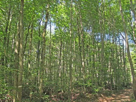 Forêt-de-Thise_11-parcelle-40-groupe-de-jeunesse-450.jpg